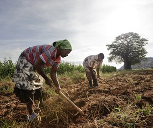 0 southern africa Workers preparing fields to grow corn Gutu project irrigation site. Photo by DAVID WHITE cropped