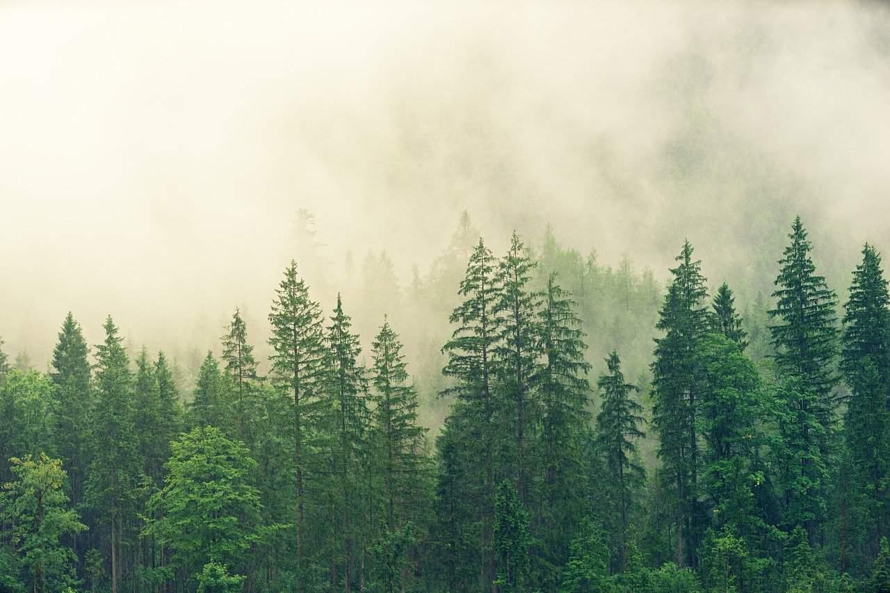 foresta 1598530463